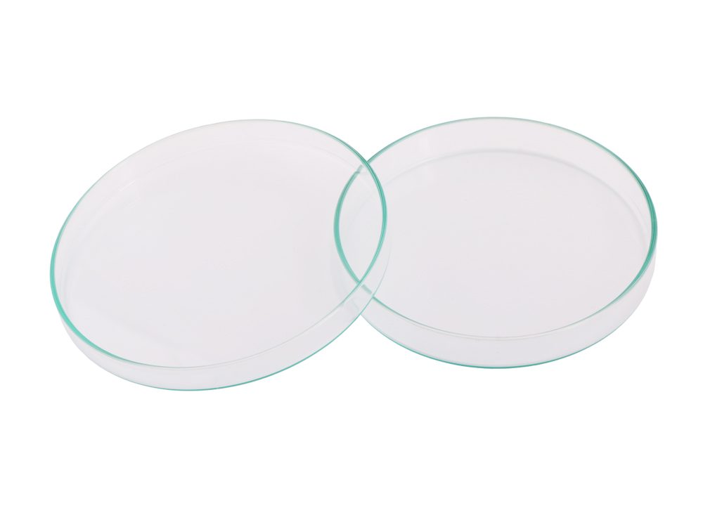 Glass Petrie Dish (12 cm)