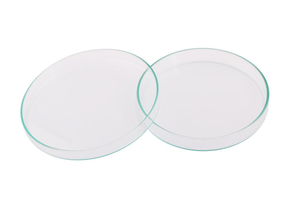 Glass Petrie Dish (15 cm)