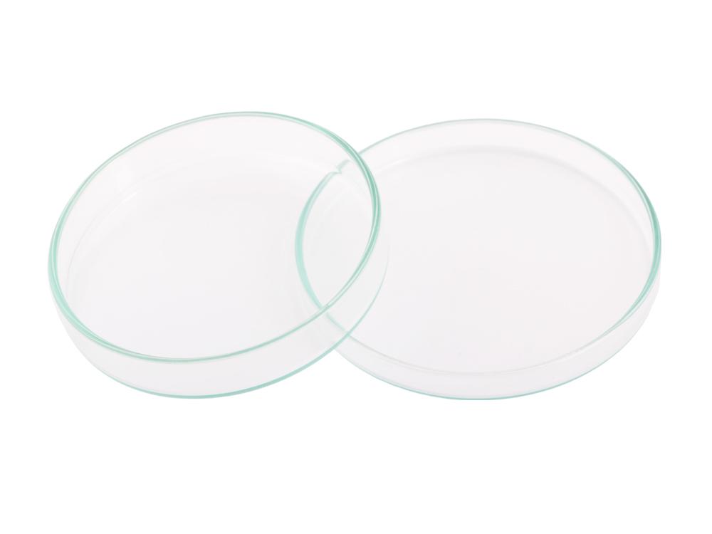 Glass Petrie Dish (8 cm)